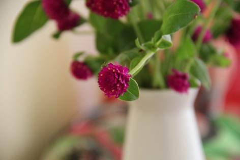 Hoa nua
